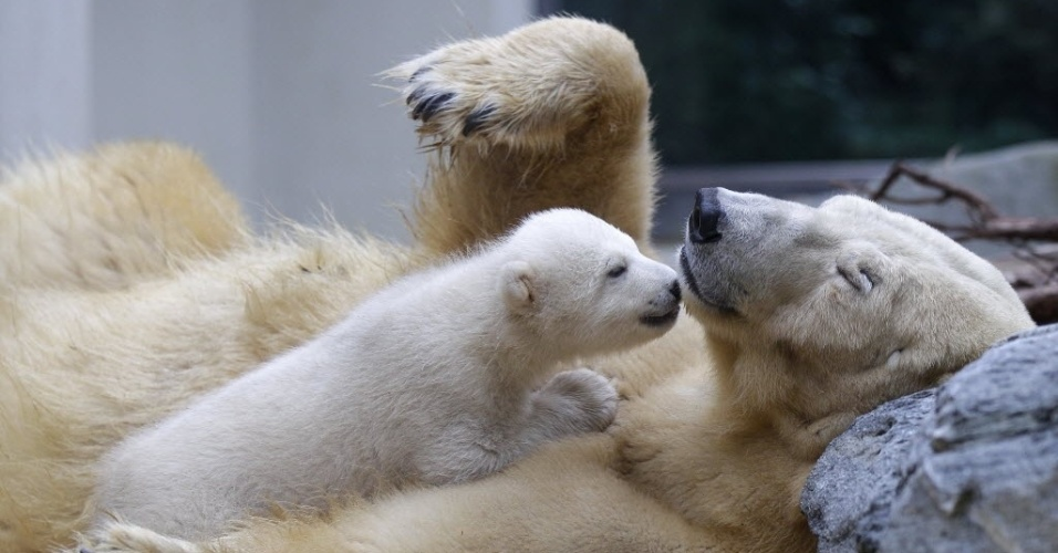 O pequeno urso polar Anori brinca com sua m&#227;e Vilma pela primeira vez fora de sua gruta no zool&#243;gico de Wuppertal, na Alemanha