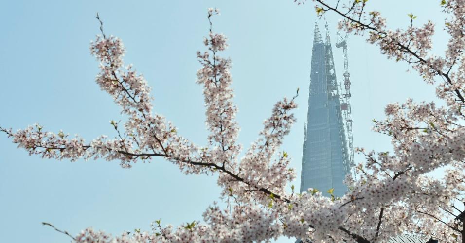 Flores de cerejeira são vistas no centro de Londres, no Reino Unido
