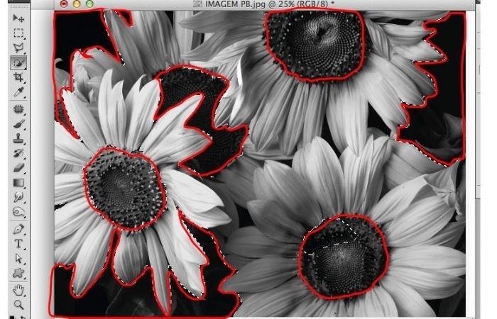 com o mouse para subtrair o miolo da flor e também o fundo preto