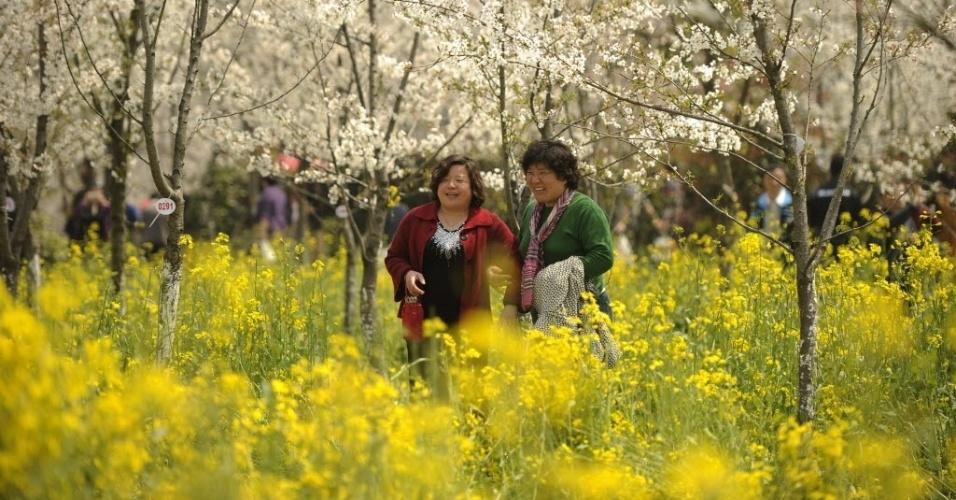 Turistas registram foto de cerejeira em Xangai, China