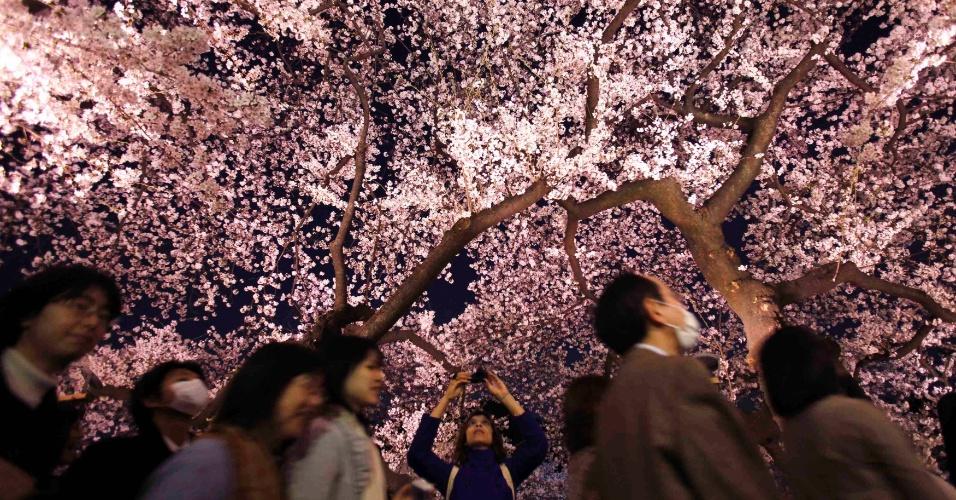 Mulher fotografa flores de cerejeira em Chidorigafuchi, no centro de Tóquio