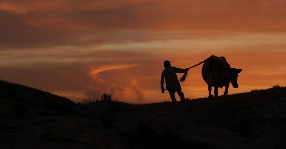 Menino caminha com vaca em Mazar-i Sharif, no Afeganistão