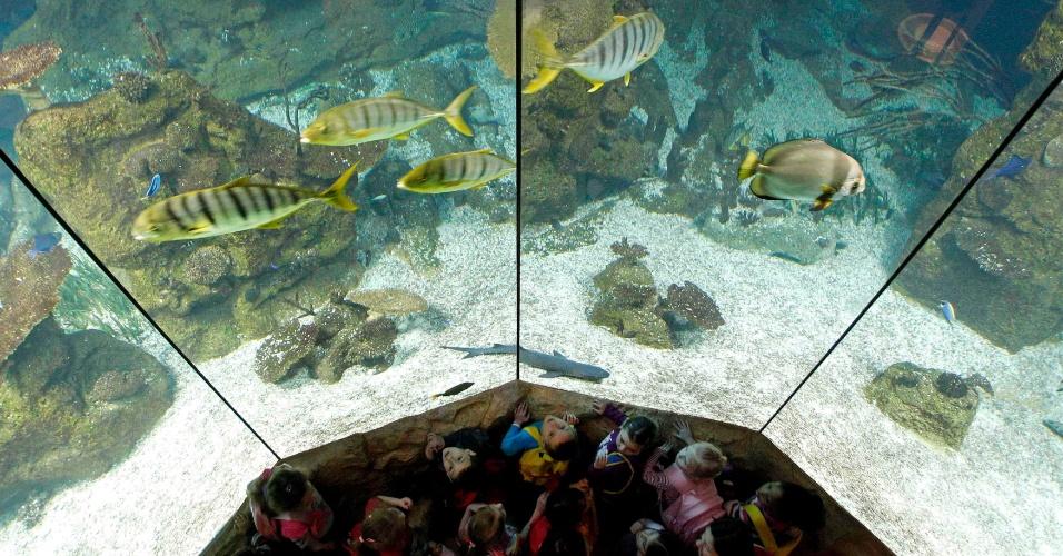 Crianças em um aquário de água salgada em 'Haus des Meeres' (Aqua Terra Zoo) em Viena
