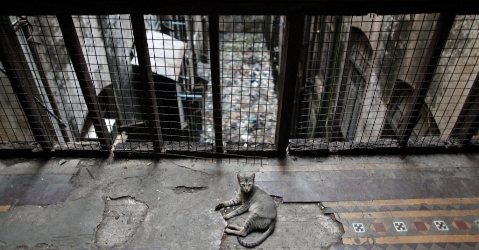 Gato descansa em &#225;rea de edif&#237;cio colonial deteriorado de Yangon (Mianmar)