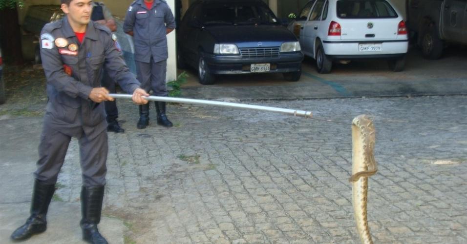 Uma cascavel de quase dois metros foi encontrada nesta quinta-feira (12) no bairro Vila Atlântida, na cidade de Montes Claros (MG). Moradores acionaram os bombeiros, que capturaram o animal e o entregaram ao escritório do Ibama.
