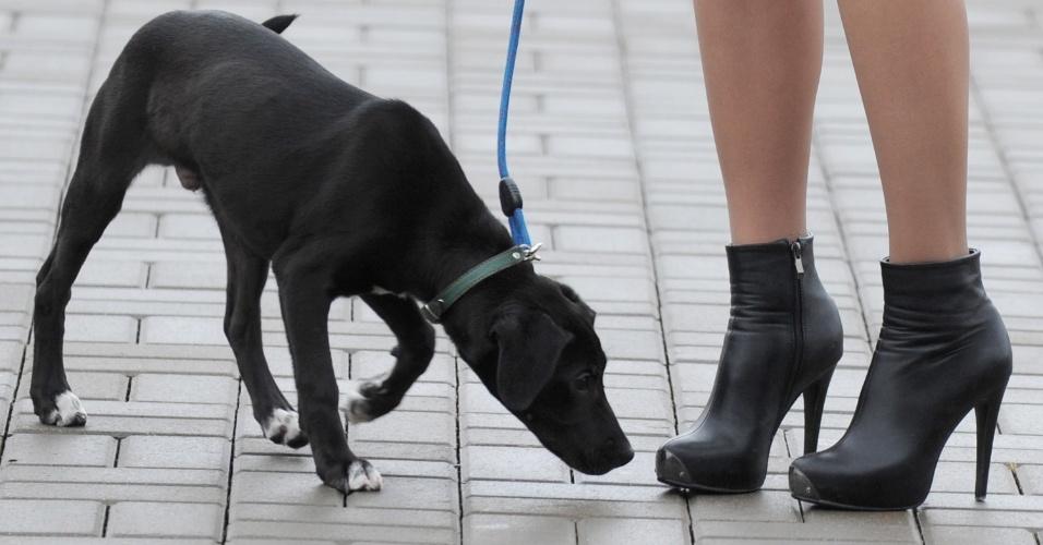 Cão caminha ao lado de sua dona na cidade bielorrussa de Logoisk
