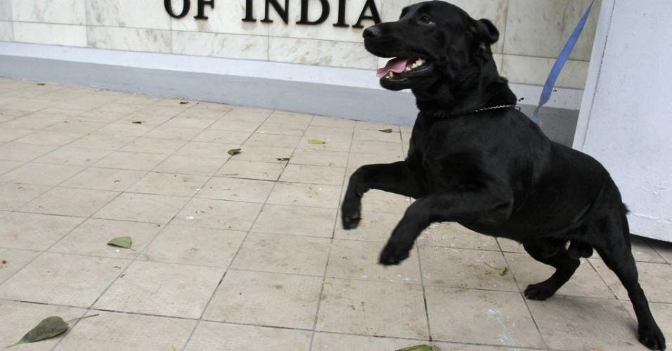 Cão farejador da polícia indiana é amarrado do lado de fora do escritório do Reserve Bank of India, que anunciou redução em suas taxas de juros para estimular a economia