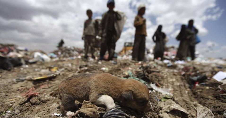 Filhote de cachorro brinca em lixão em área de Sanaa, capital do Iêmen