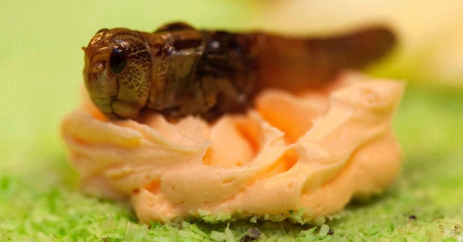 Gafanhoto caramelizado é usado para decorar bolo feito de insetos na Universidade de Wageningen, na Holanda