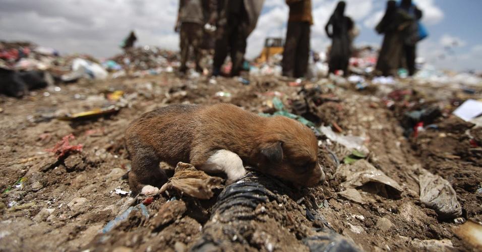 Imagem mostra filhote fotografado em lixão a céu aberto em Sanaa, capital do Iêmen