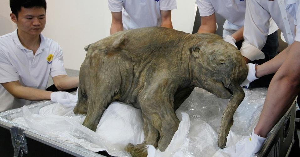 Museu de Hong Kong exibirá até o dia 10 de maio o bebê mamute mais bem conservado do mundo