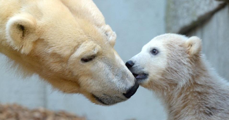 Urso polar Anori brinca com sua mãe, Vilma, no zoo de Wuppertal, na Alemanha. Nascido no dia 4 de janeiro, Anori é meia-irmã do famoso urso polar Knut, que morreu em 2011
