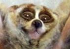 Oi�! Tumblr com imagens em GIF traz breves gestos de bichos