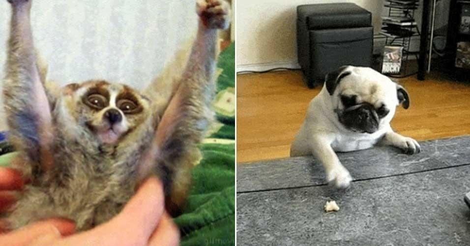 tumblr animais gif