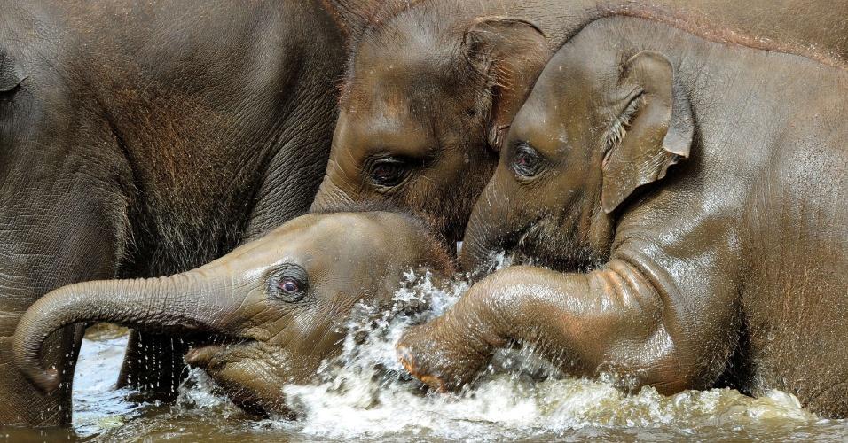 Elefantes asiáticos tomam banho em uma piscina no jardim zoológico de Hanover