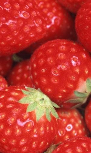 Estudo mostra que comer frutas vermelhas pode retardar o declínio cerebral; morango