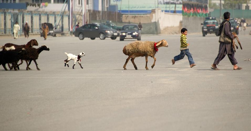 Pastor conduz rebanho a atravessar rua em Cabul, no Afeganistão