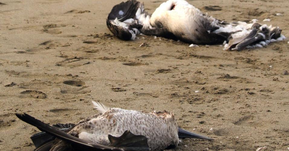 2.mai.2012 - Biguás são encontrados mortos na praia de Paita, em Tumbes, no norte de Lima, Peru