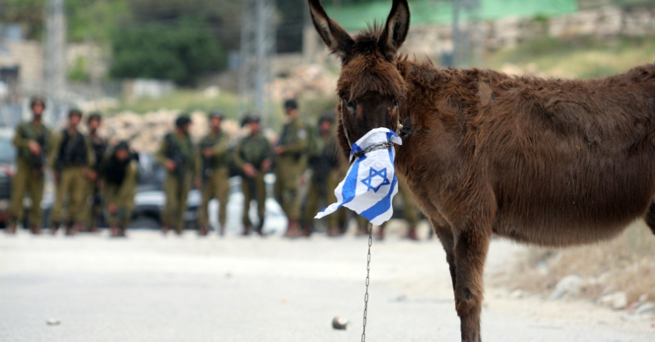 04.mai.2012 - Burro é preso com corrente durante confronto entre policiais e israelenses perto da cidade de Belém, na Cisjordânia