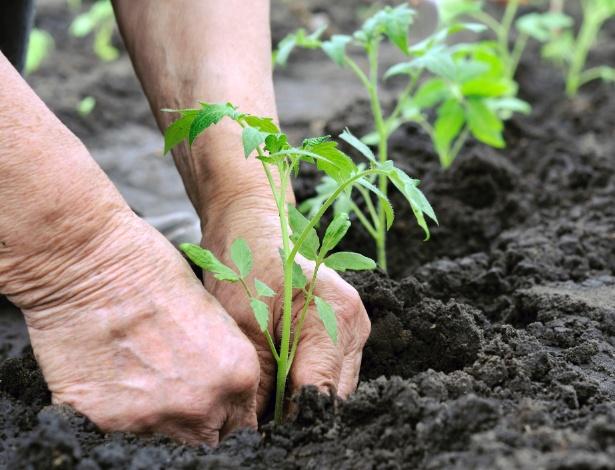 Não é preciso ter muito espaço para a horta, mas é necessário respeitar as particularidades de cada planta