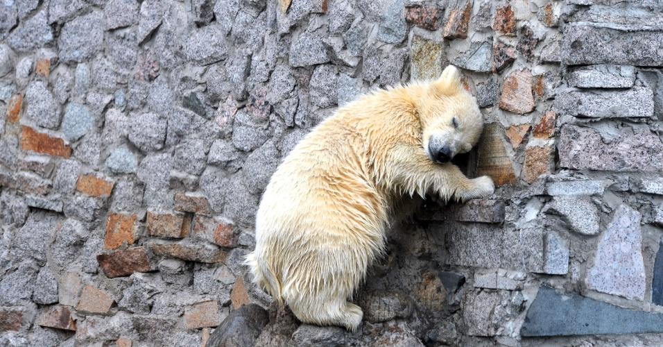 6.mai.2012 - Filhote de urso polar em zoológico de São Petersburgo, na Rússia
