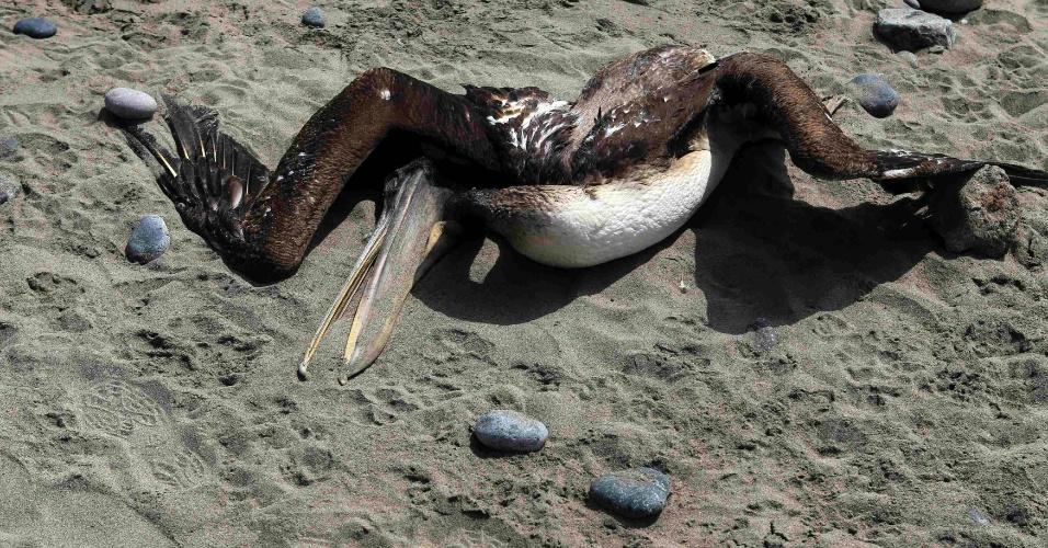 6.mai.2012 - Pelicano aparece morto na praia Cerro Azul, em Lima, no Peru