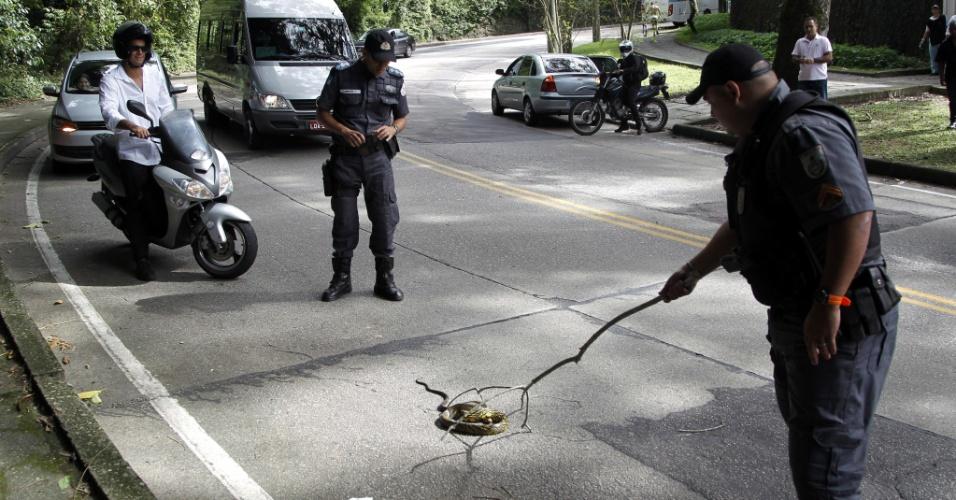 6.mai.2012 - Policiais militares param o trânsito no Rio para retirar cobra que estava na estrada do Alto da Boa Vista