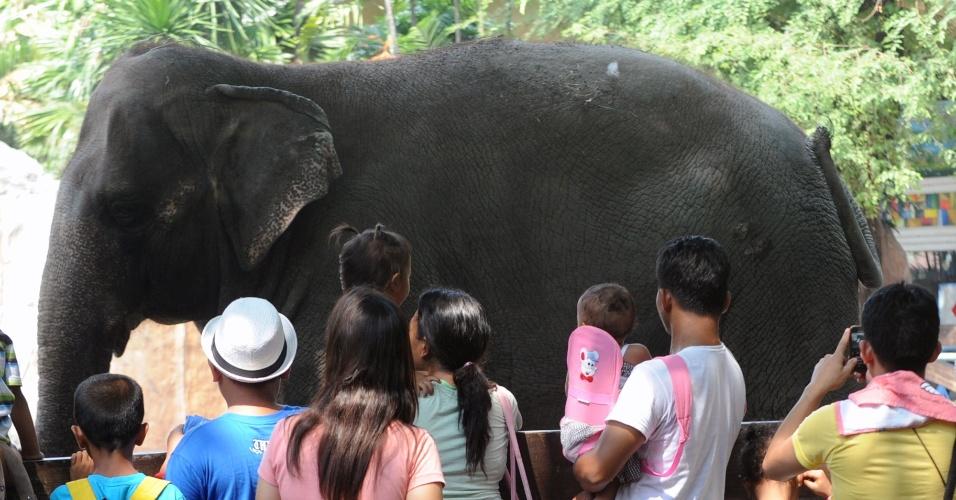 10.mai.2012 - Crianças fotografam elefante de 37 anos de idade em jardim zoológico de Manila, nas Filipinas