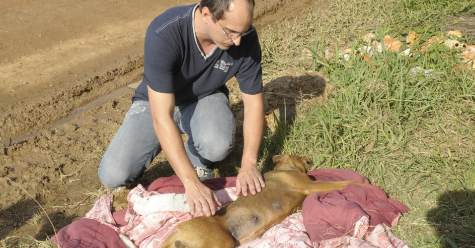 11.mai.2012 - Uma cadela de porte médio, que provavelmente foi vítima de atropelamento, foi encontrada abandonada em um terreno baldio em Joinville, Santa Catarina
