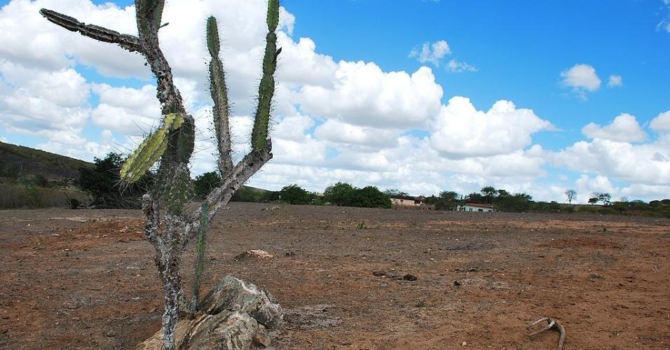 15.mai.2012 - Cacto sobrevive em meio à seca do sertão alagoano. A seca começou a se espalhar novamente pelo Nordeste. Segundo dados das defesas civis e estaduais, mais de 750 municípios já decretaram situação de emergência e mais de 4 milhões de pessoas foram afetadas