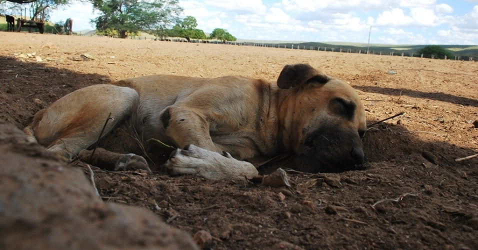 15.mai.2012 - C&#227;o dorme &#224; sombra e tenta, como pode driblar, o calor de 40&#186; em m&#233;dia no sert&#227;o alagoano. A seca come&#231;ou a se espalhar novamente pelo Nordeste. Segundo dados das defesas civis e estaduais, mais de 750 munic&#237;pios j&#225; decretaram situa&#231;&#227;o de emerg&#234;ncia e mais de 4 milh&#245;es de pessoas foram afetadas