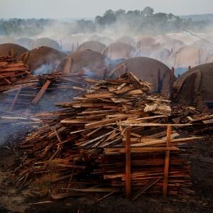 Greenpeace denunciou extração ilegal de madeira para uso em carvoarias. Crime organizado lucra até US$ 100 bi por ano com atividade