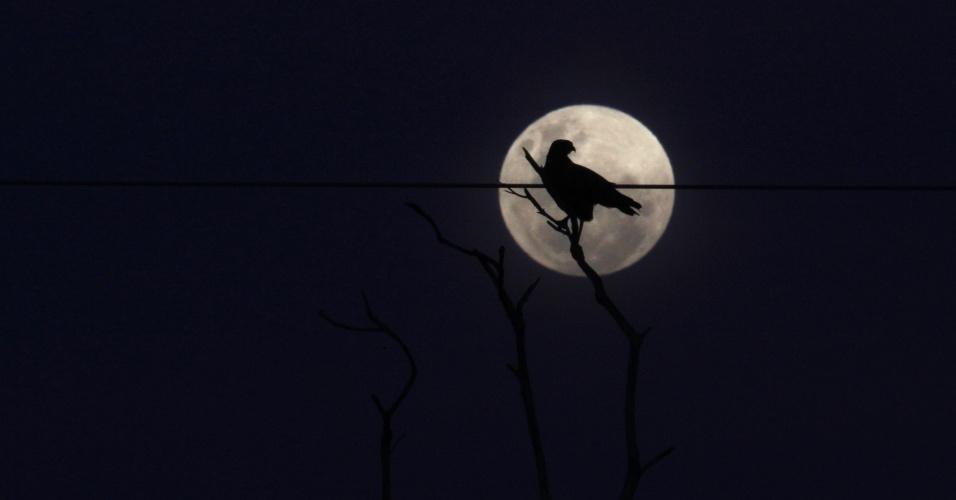15.mai.2012 - Pássaro pousa em árvore, sob a lua, na aldeia Yawalapiti, no Mato Grosso
