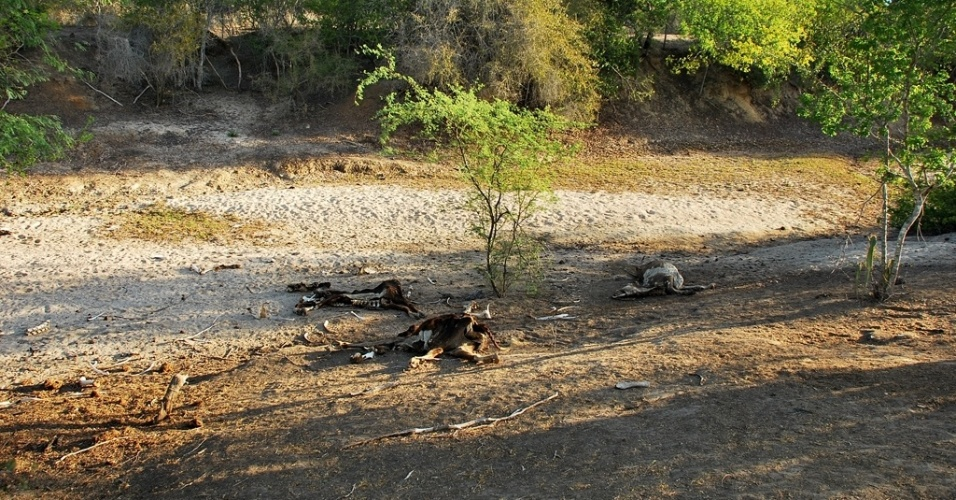 17.mai.2012 - O riacho do Brás, em Poço Redondo (SE), virou cemitério de animais com a maior seca já registrada no Nordeste em décadas