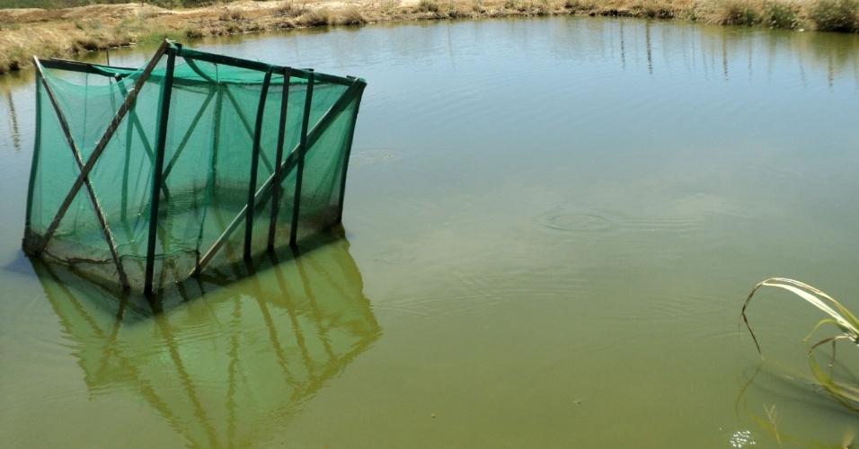 18.mai.2012 - Flagrante mostra que água furtada da adutora do Oeste servia para manter criação de cerca de 50 mil peixes, em Ouricuri (PE)