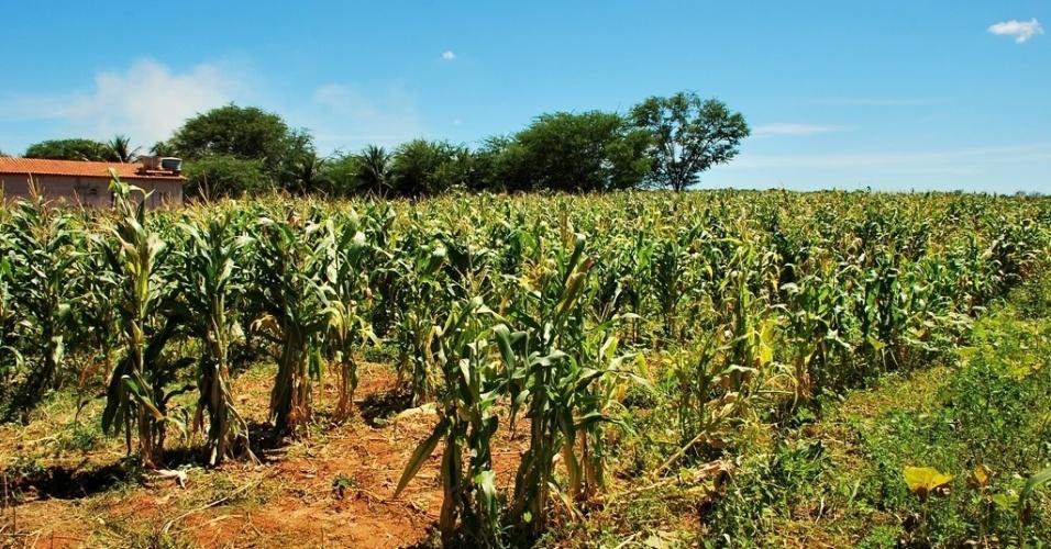 21.mai.2012 - Projeto de irrigação como esse em Petrolândia (PE) garante sustento de produtores beneficiados por sistema no sertão, mesmo durante a seca.