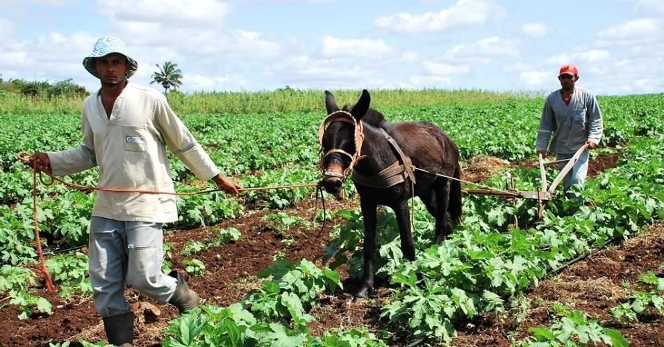 21.mai.2012 - Projeto Jacaré-Curituba cria oásis em meio à seca em Poço Redondo (SE). Famílias são beneficiadas com água, enquanto comunidades vizinhas não têm condições de plantar