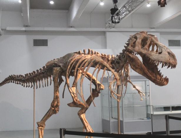 """Foto de tiranossauro """"bataar"""", parente asiático do temido """"tiranossauro rex"""", supostamente vendido por US$ 1 milhão em Nova York (21/5/12)"""