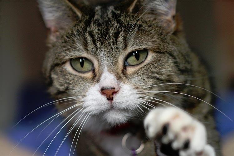 O gato está vivo ou morto? Esta é a pergunta que Schrödinger fazia em seu experimento mental para mostrar que a realidade depende da posição do observador. Com o experimento o pesquisador procurava discutir as questões levantadas no Princípio da Incerteza do cientista Werner Karl Heisenberg.