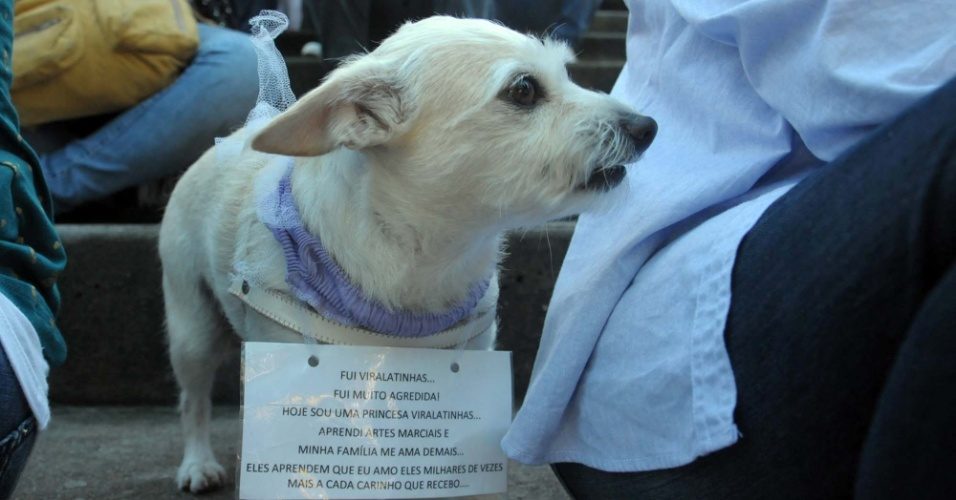 A cachorrinha tamb&#233;m participou da marcha das vadias em Florian&#243;polis. O movimento, que come&#231;ou no Canad&#225; e se espalhou pelo mundo, &#233; organizado coletivamente e n&#227;o tem lideran&#231;as