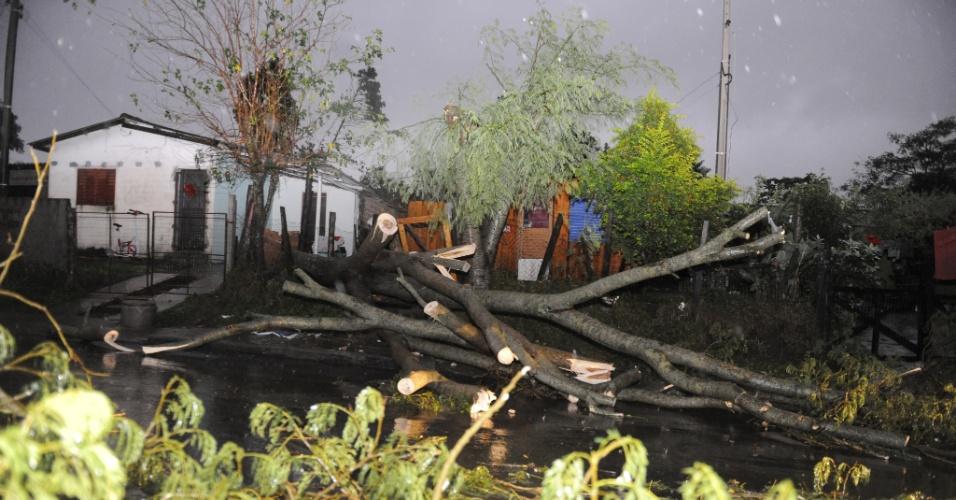 30.mai.2012 - A forte chuva que caiu sobre Santa Maria (RS) derrubou árvores nesta quarta-feira. O acumulado desde a noite de terça chega a 130,6 mm, superando a médica de precipitações de maio no município, de 129 mm