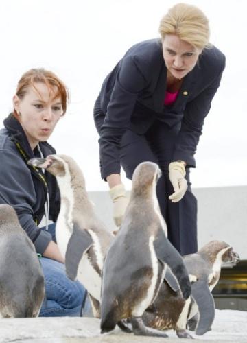 31.mai.2012 - Premiê da Dinamarca, Helle Thorning-Schmidt (direita), alimenta pinguins durante encontro de líderes do Conselho dos Estados do Mar Báltico, em Stralsund