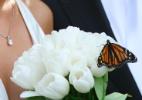 """""""Modinha"""" em casamentos, soltar borboletas em cerimônias é crime ambiental - Thinkstock"""