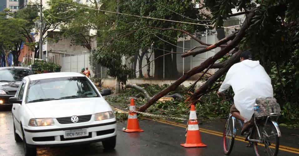 5.jun.2012 - Árvore caída na rua Américo Brasiliense, na zona Sul da capital paulista