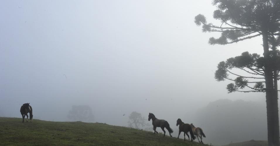 5.jun.2012 - Manhã de neblina e baixas temperaturas em Porto Alegre, capital do Rio Grande do Sul, Os termômetros chegaram a 0ºC, com geadas. Não há previsão de chuvas para hoje na capital gaúcha