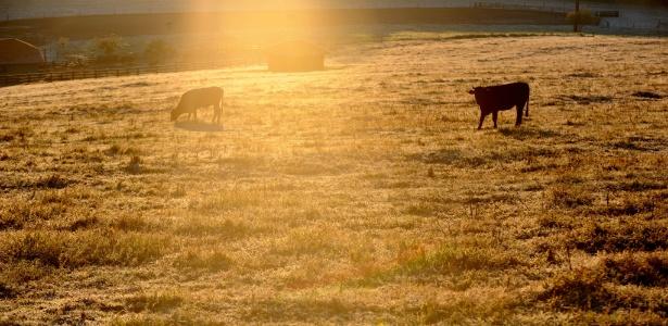 Campos de Chapecó (SC) amanheceram nesta sexta-feira cobertos pela geada