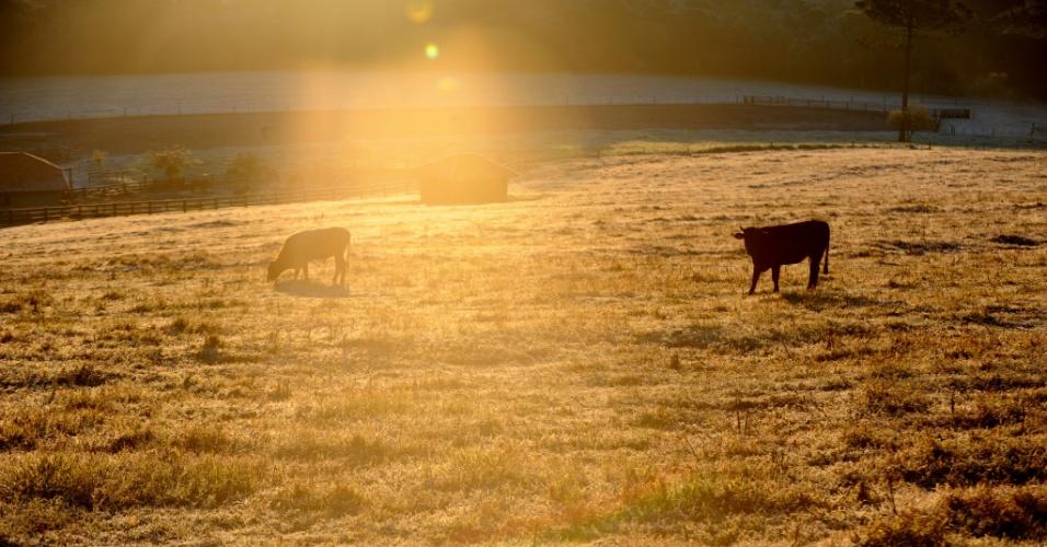 8.jun.2012 - Campos de Chapecó (SC) amanhecem cobertos pela geada