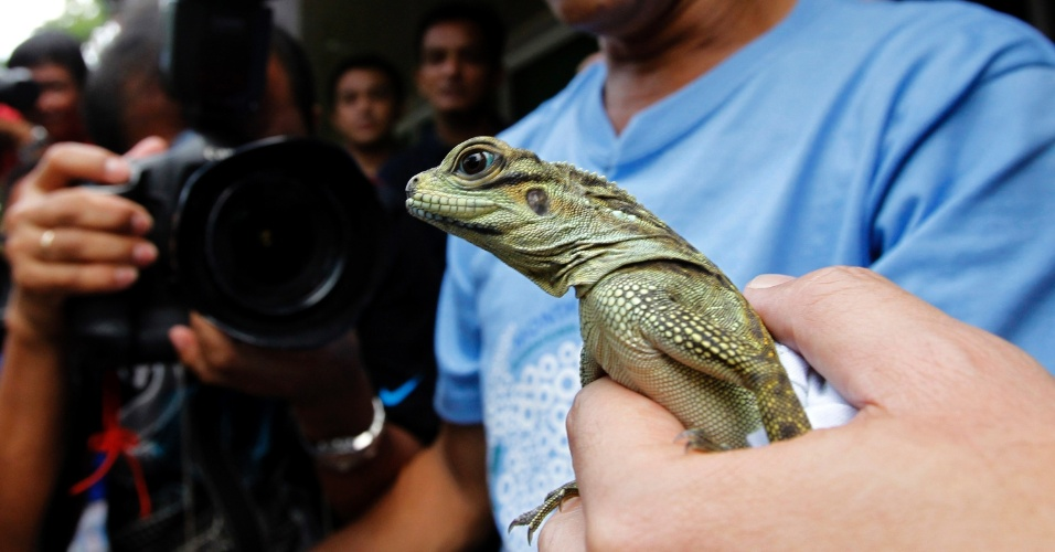 8.jun.2012 - Veterin&#225;rio exibe lagarto Sailfin repatriado de Hong Kong, na China, na Cidade de Quezon, nas Filipinas