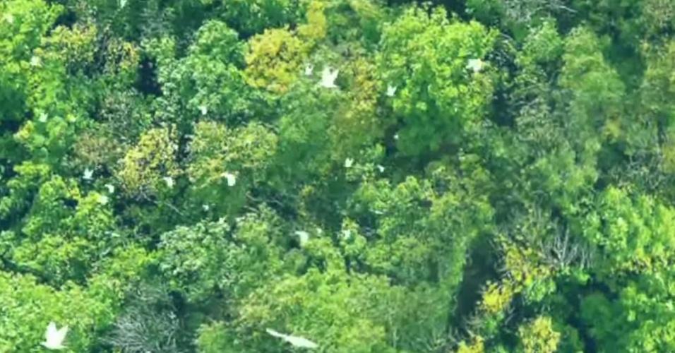 Parque Nacional Yasuní, na Amazônia Equatoriana