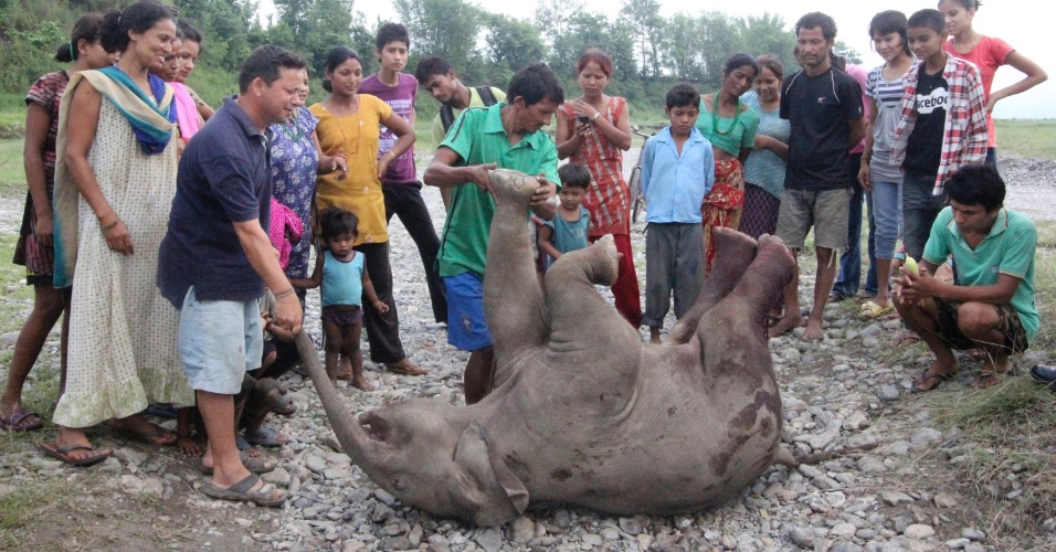 12.jun.2012 - Nepaleses cercam filhote de elefante encontrado morto na manh&#227; em Jhapa, no Nepal, devido a uma les&#227;o